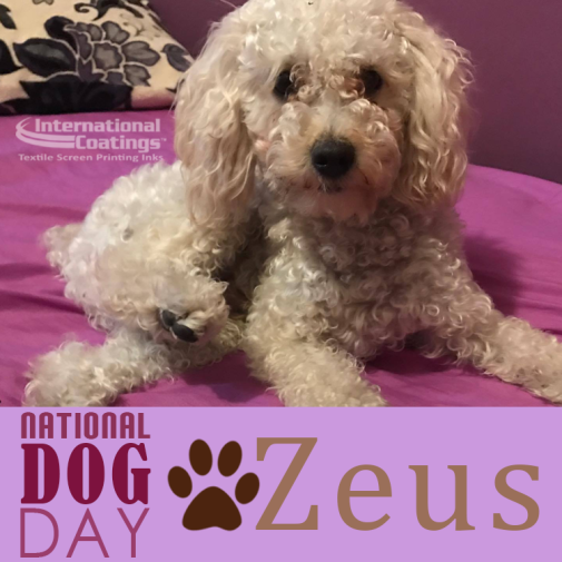 NationalDogDayZeus